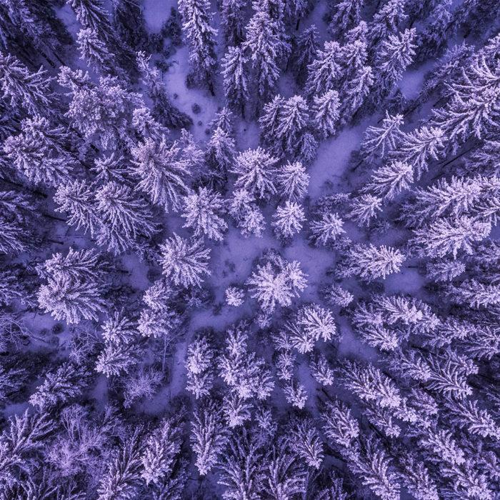 Violet Deep Forest
